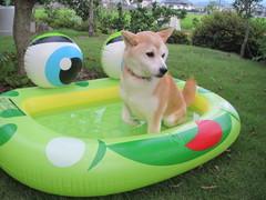 水遊びをする愛犬