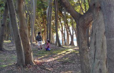 公園にて小人を探す息子たち