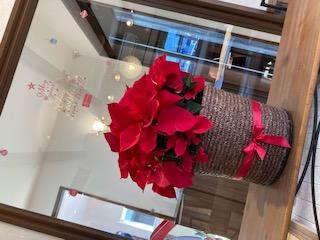 プライムホーム住宅展示場に飾ってある真っ赤なポインセチア
